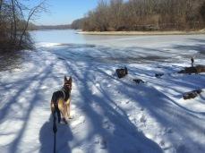 Joey looking at the lake